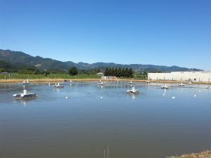 pond wastewater